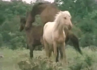 Horses enjoying their hardcore romp