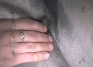 Dude fucking a tight horse pussy on cam