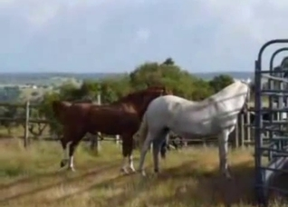 Two horses enjoying raw sex outdoors